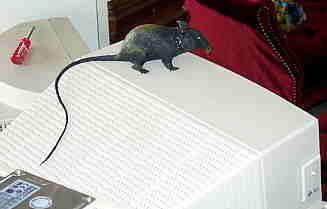 rubber rodents for free internet access
